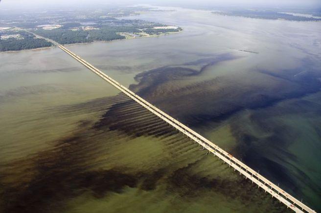 Image from Virginia Institute of Marine Science (VIMS)